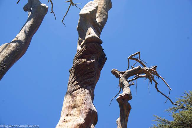 Lebanon, Cedars, Rudy Rahme