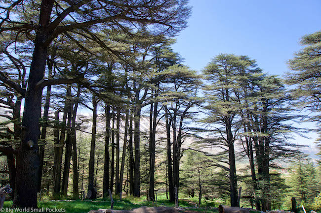 Lebanon, Cedars, Tree Tops