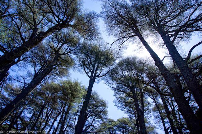 Lebanon, Cedars, Tree and Sky