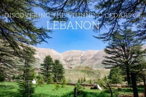 Discovering the Stunning Cedars with Explore Lebanon Tours