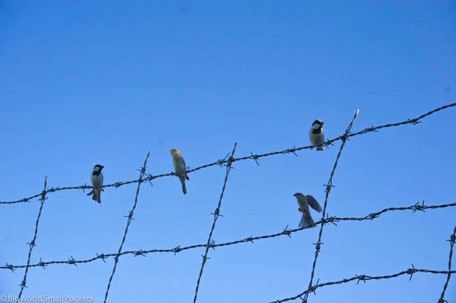 Sudan, Birds, Wire Fence