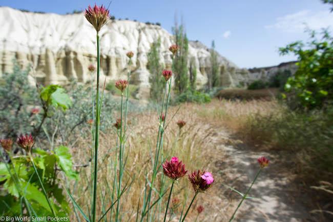 Turkey, Cappadocia, Flowers