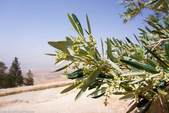 Middle East, Jordan, Olive