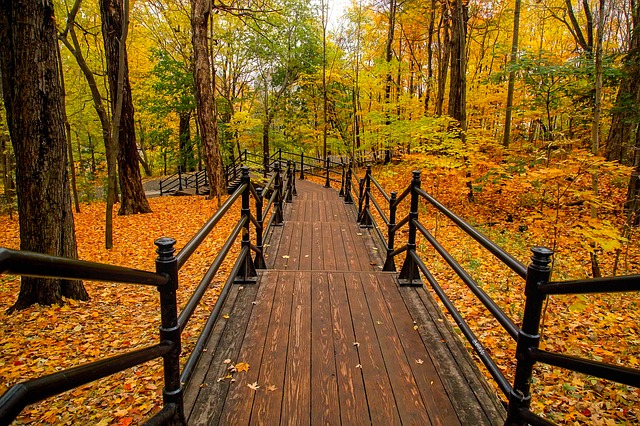 Canada, Path, Autumn Leaves