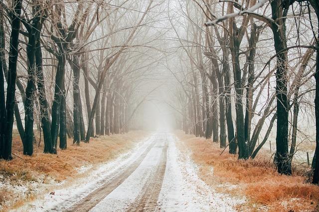 Canada, Tracks, Snow