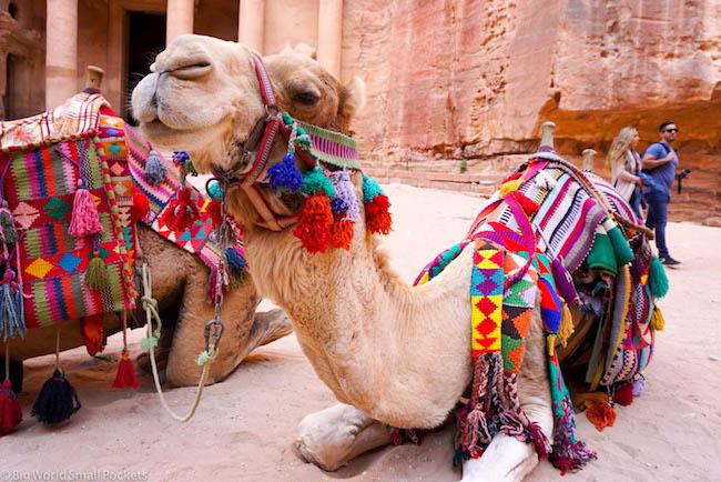 Jordan, Petra, Camel
