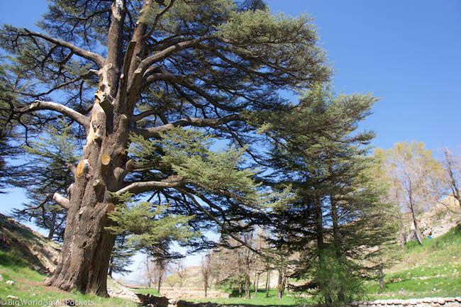 Lebanon, Cedars, Trees