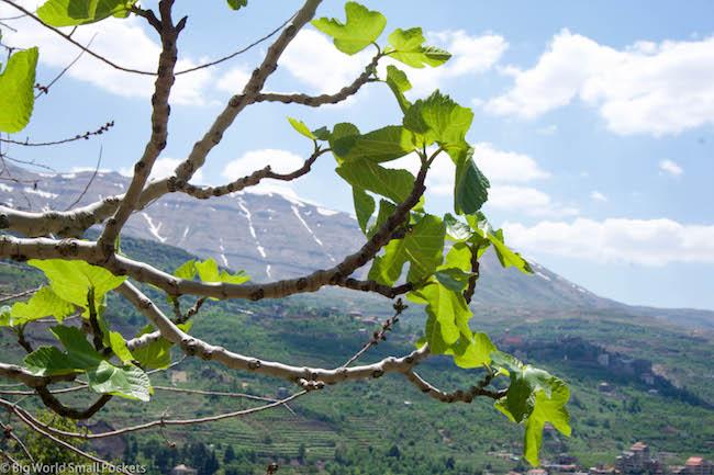 Lebanon, Cedars, Scene