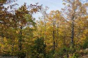 Lebanon, Aakkar, Iron Oak Forest