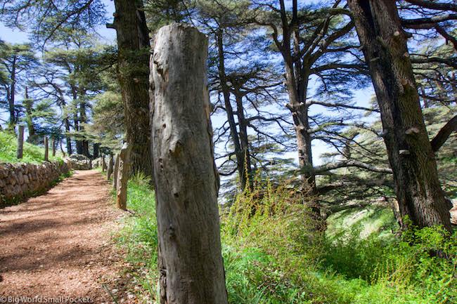 Lebanon, Cedars, Path
