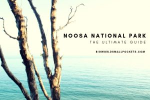 Noosa National Park : The Ultimate Guide
