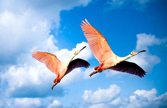 Ethiopia, Lakes, Flamingos