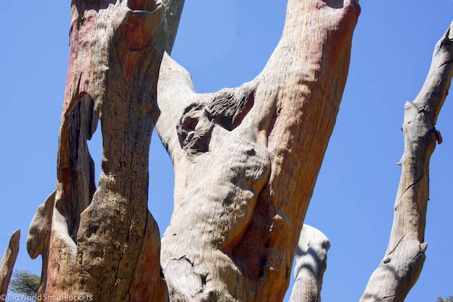 Lebanon, Cedars, Jesus Carvings