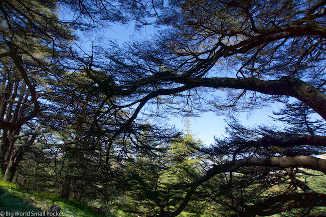 Lebanon, Cedars, Reserve