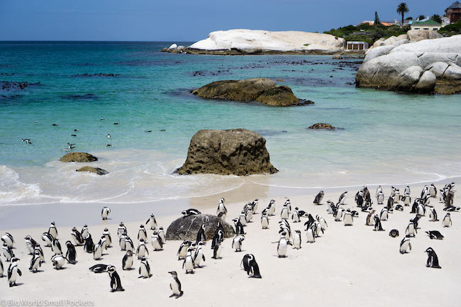 South Africa, Cape Town, Penguins