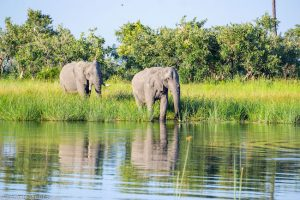 Botswana, Okavango Delta, Elephants