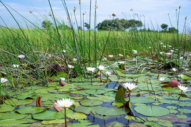 Botswana, Okavango Delta, Water Lillies