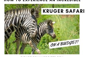 How to Experience a Kruger National Park Safari on a Budget