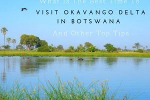 What is the Best Time to Visit Okavango Delta and Other Top Tips