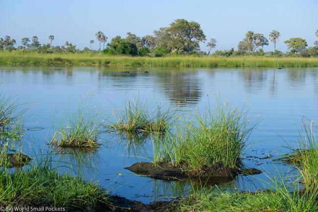 Botswana, Okavango Delta, Reeds