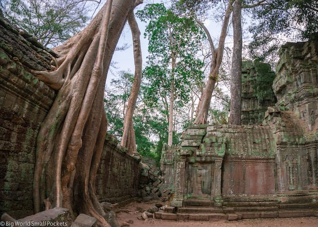 Cambodia, Angkor, Trees