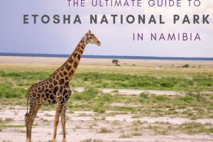 Etosha National Park: The Ultimate Guide