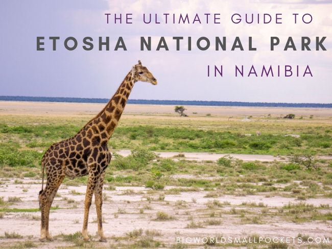 Etosha National Park Guide