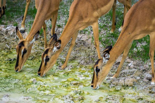 Namibia, Etosha, Antelope