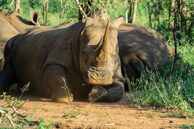 Swaziland, Hlane National Park, Rhino