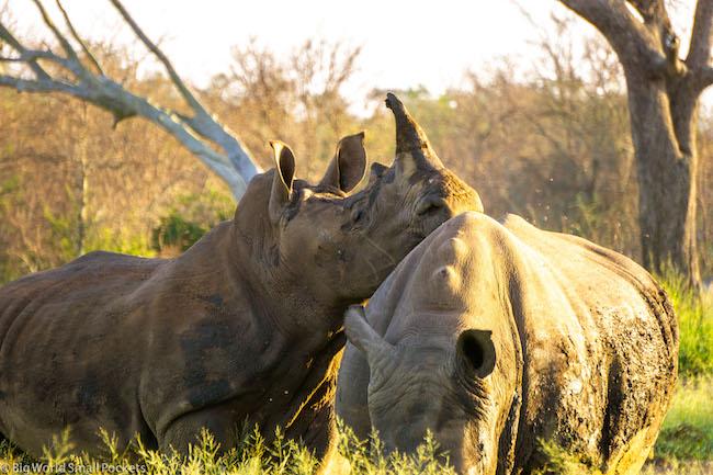 Swaziland, Hlane, Rhino Lean