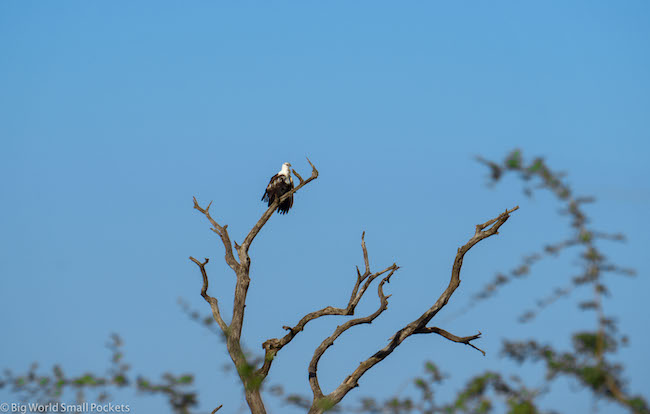 Swaziland, National Park, Eagle