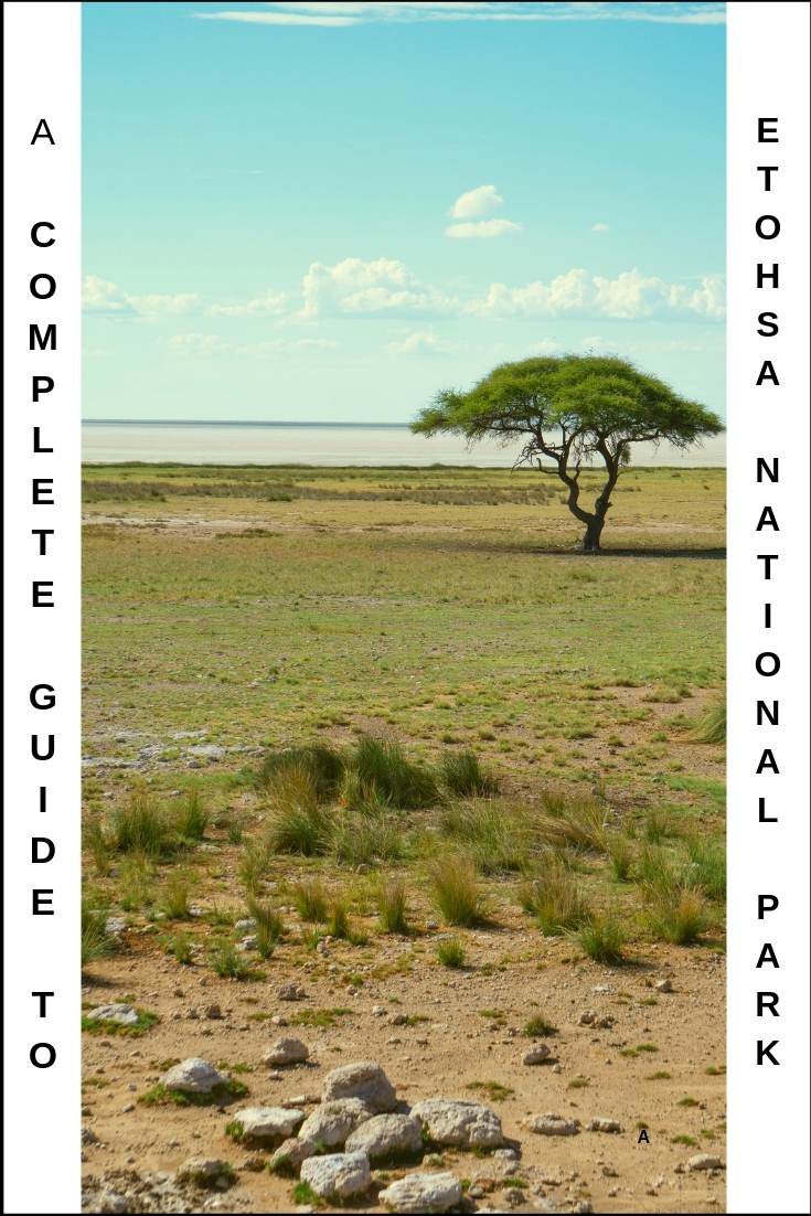 The Complete Guide to Etosha National Park in Namibia {Big World Small Pockets}