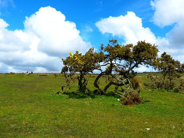 UK, Cornwall, Bodmin Moor