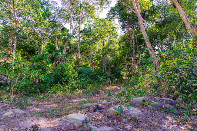 Cambodia, Koh Rong Sanloem, Forest