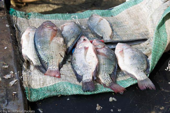 Kenya, Lake Naivasha, Fish