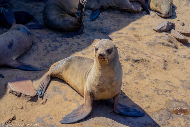 Namibia, Cape Cross, Seal Colony