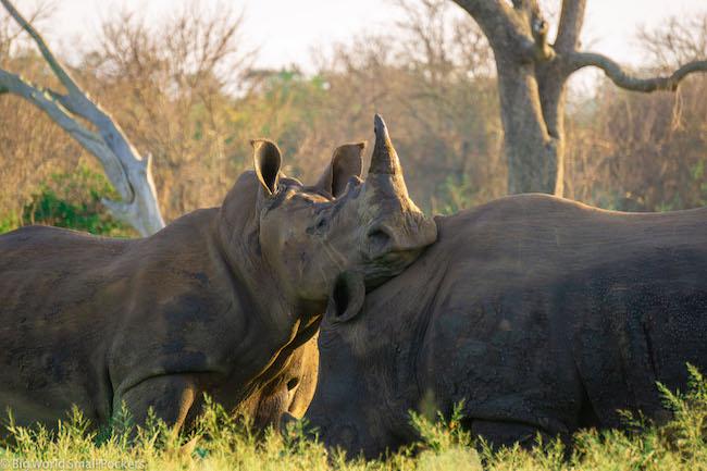 Swaziland, eSwatini, Rhinos