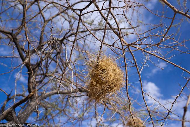 Namibia, Birds Nest, Blue Sky