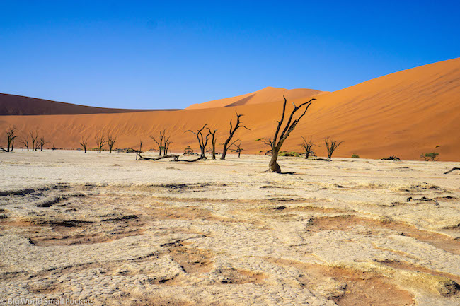 Namibia, Sossusvlei, Petrified Tree Forest
