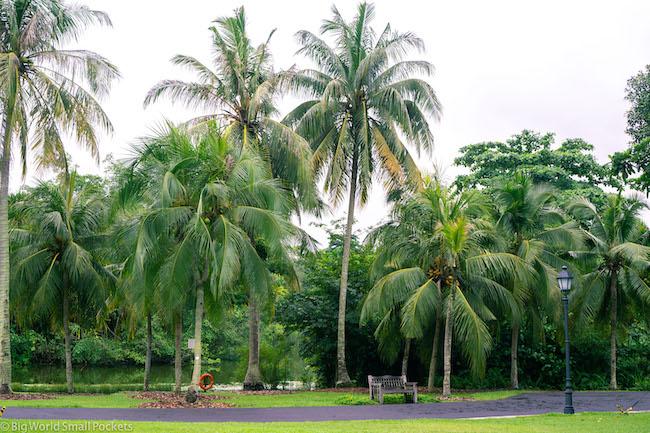Singapore, Botanic Gardens, Bench