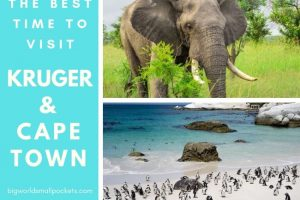 The Best Time to Visit Kruger & Cape Town