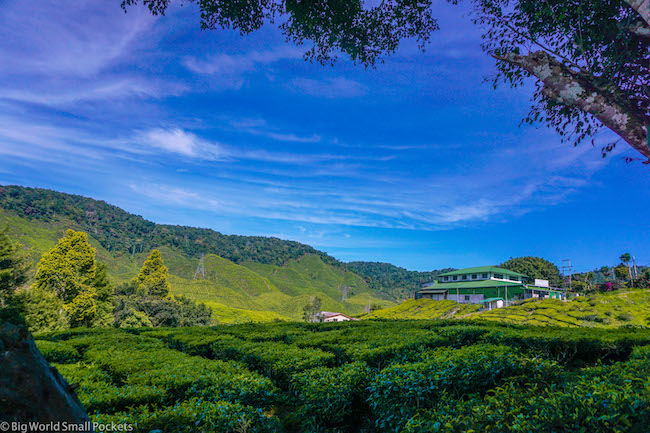 Cameron Highlands, Tea, Plantations