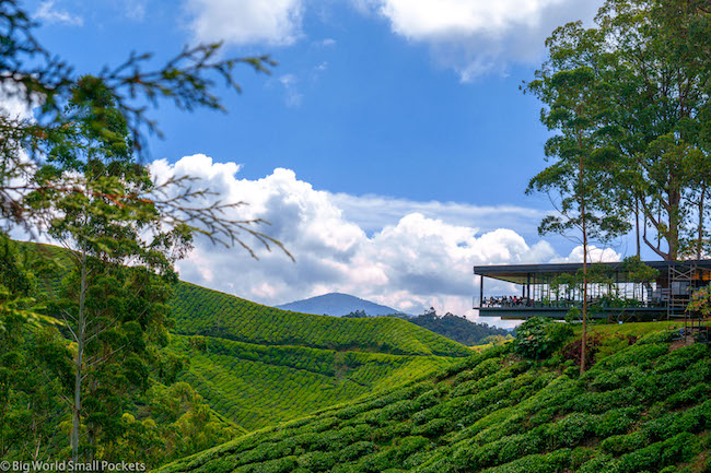 Cameron Highlands, Tea Room, BOH