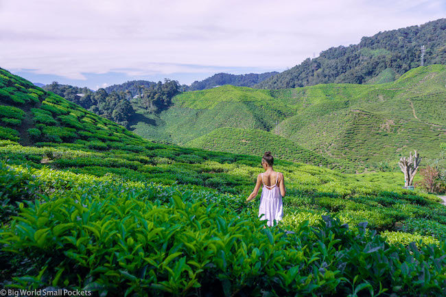 Malaysia, Cameron Highlands, Me in Tea