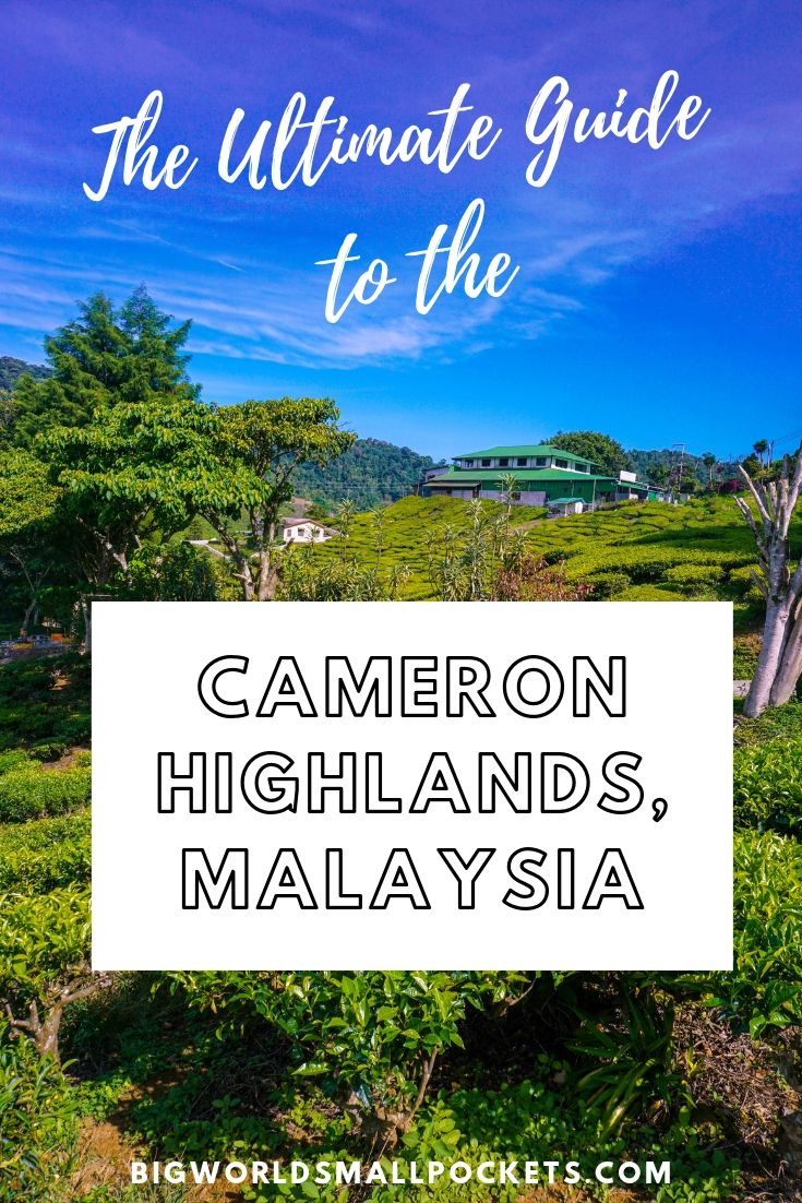 The Ultimate Guide To The Cameron Highlands in Malaysia {Big World Small Pockets}