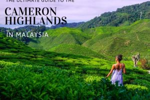 Cameron Highlands, Malaysia : The Ultimate Guide