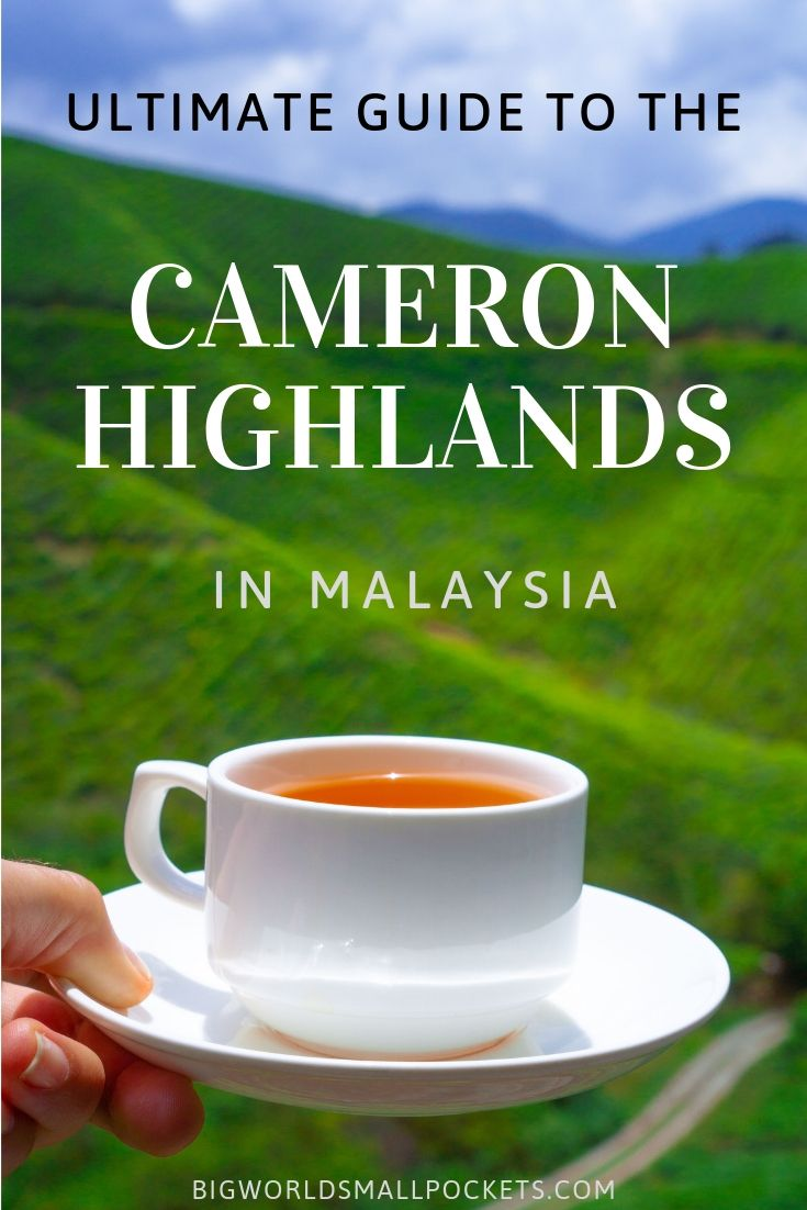 Ultimate Guide to Malaysia's Cameron Highland {Big World Small Pockets}