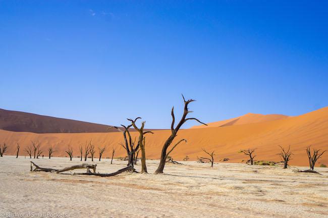 Namibia, Desert, Sossusvlei Forest