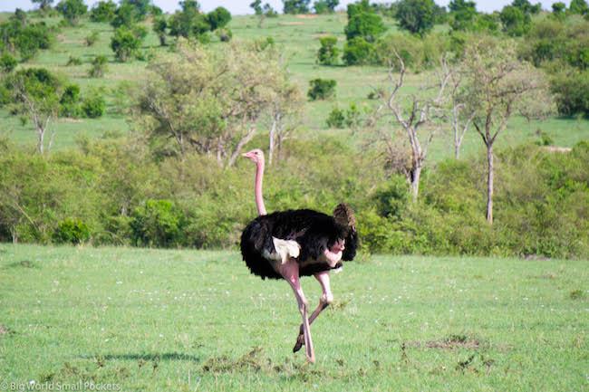Kenya, Lake Nakuru, Ostrich