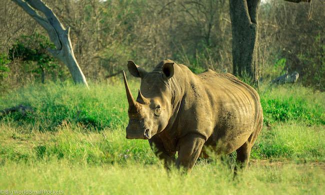 Kenya, Safari, Rhino